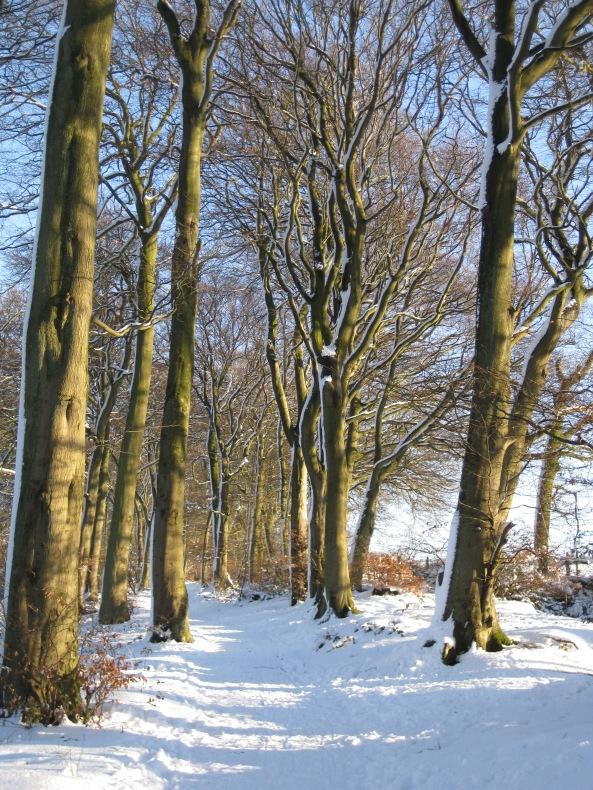 Snow photos 068
